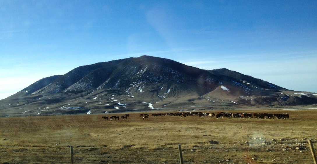 Wild horses by Sheep mountain