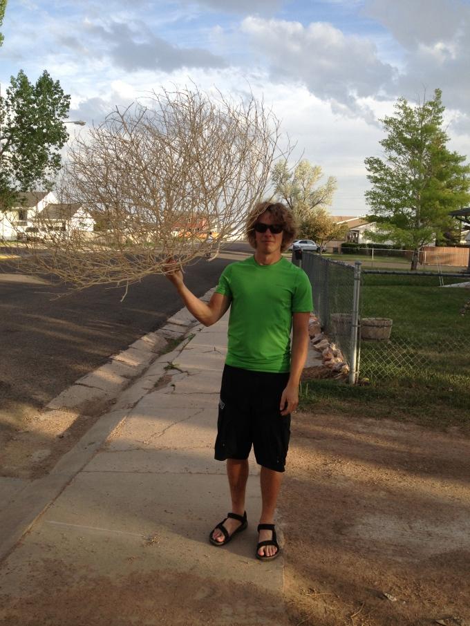HUGE tumbleweed!