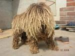 hairy_dog-1