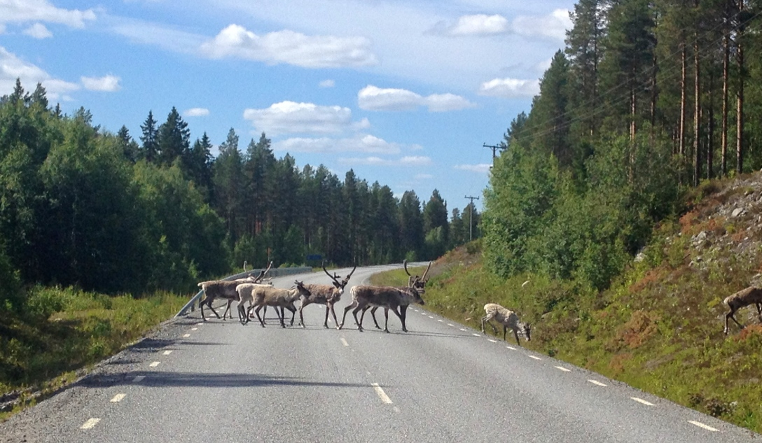 Traffic jam on the road between Åsele and Vilhelmina