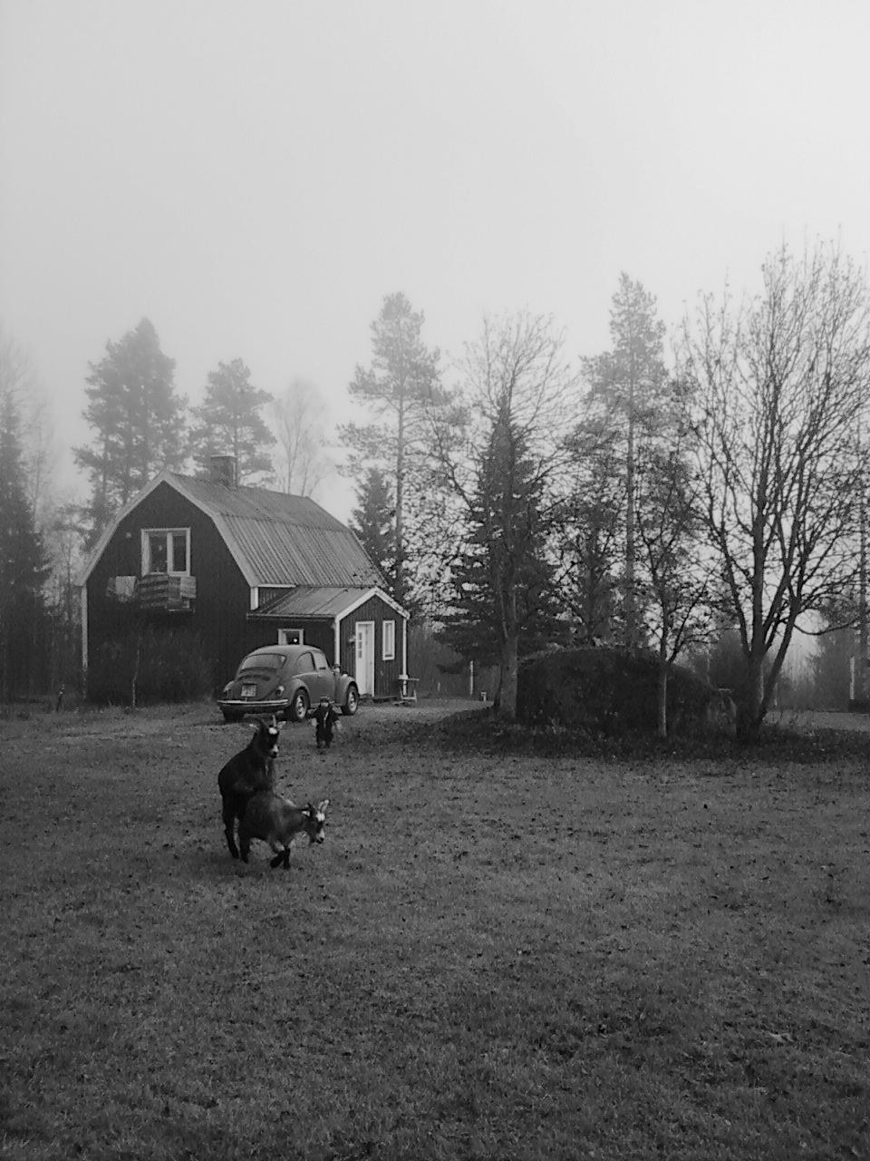 Brunst på gårn, by Maja Vingsle