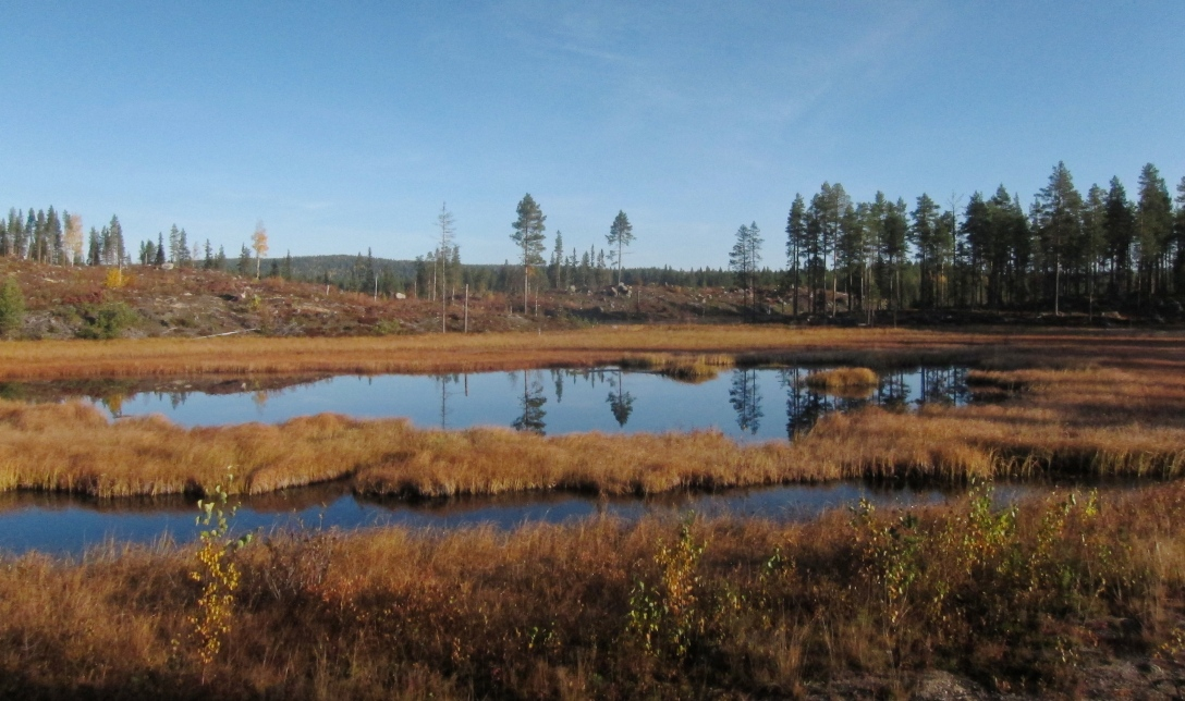 Marshlands near Tallsjö