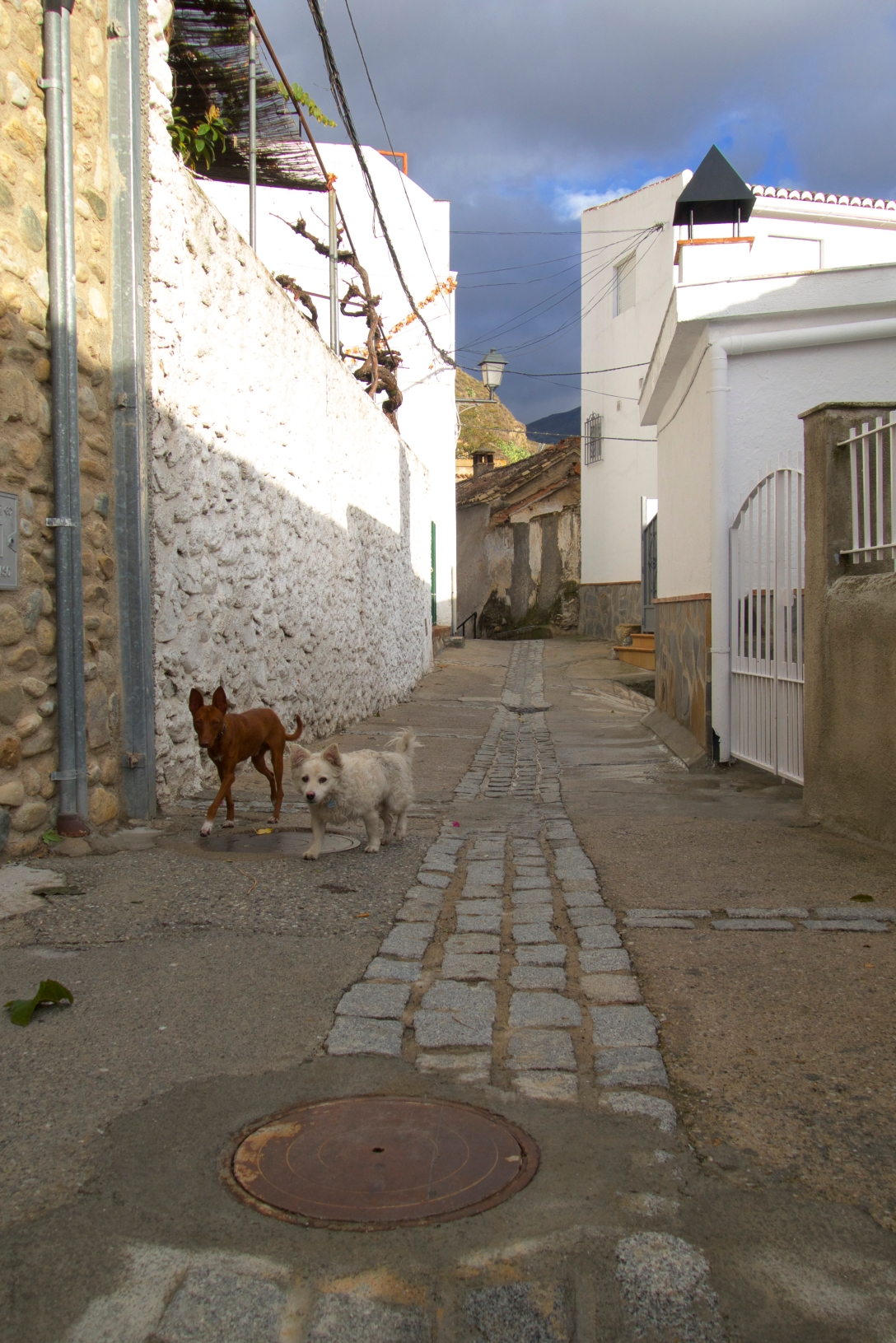 Dogs in Monachil