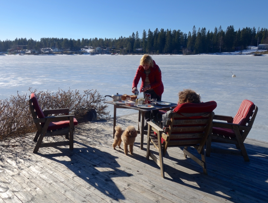 Spring by Västerbotten. Sun and ice (+ a mother, a poodle and a Martin).