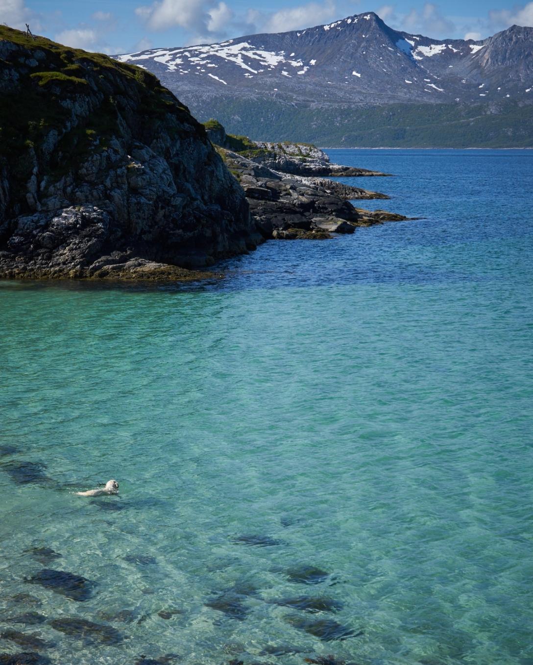 Brensholmen and a Golden retrieiving in the arctic sea.