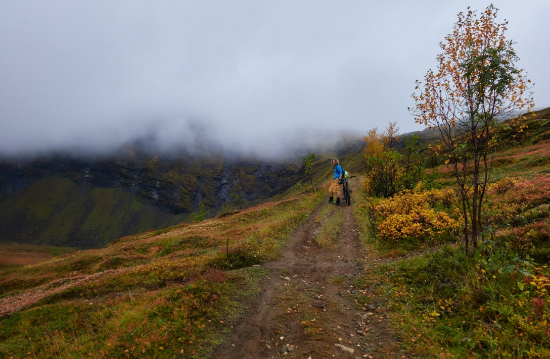 Yellow in Tromsdalen.