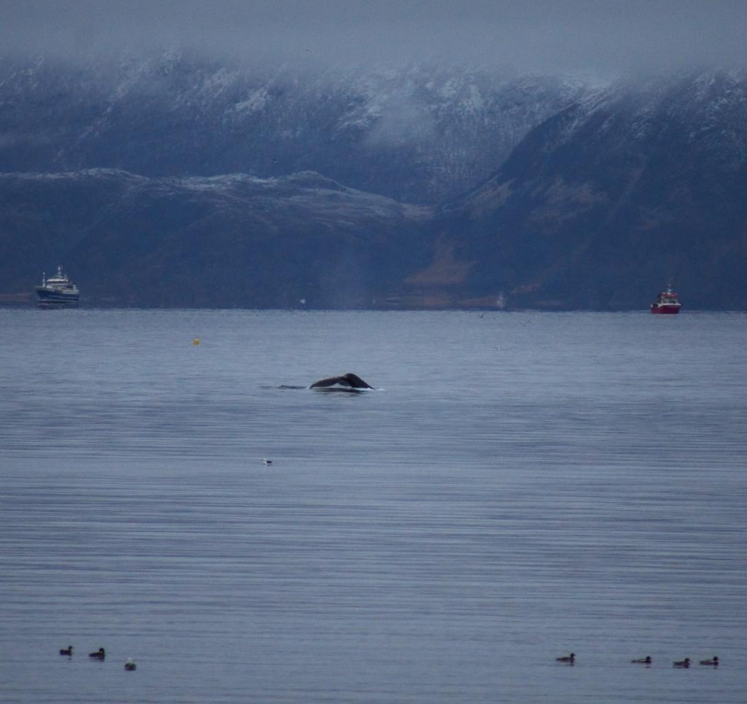 Hello humpback whale!