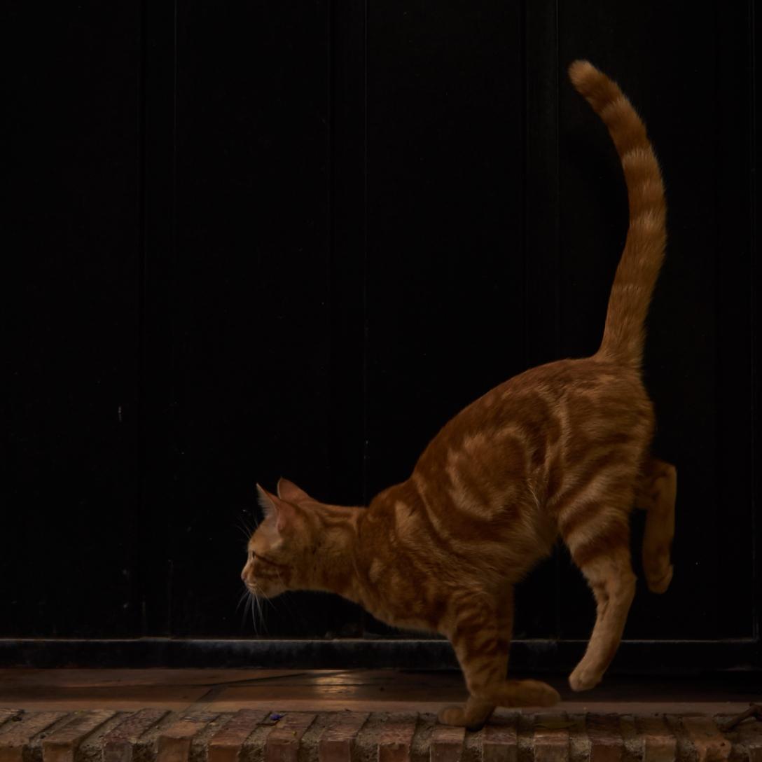 Normal cat. Monachil.