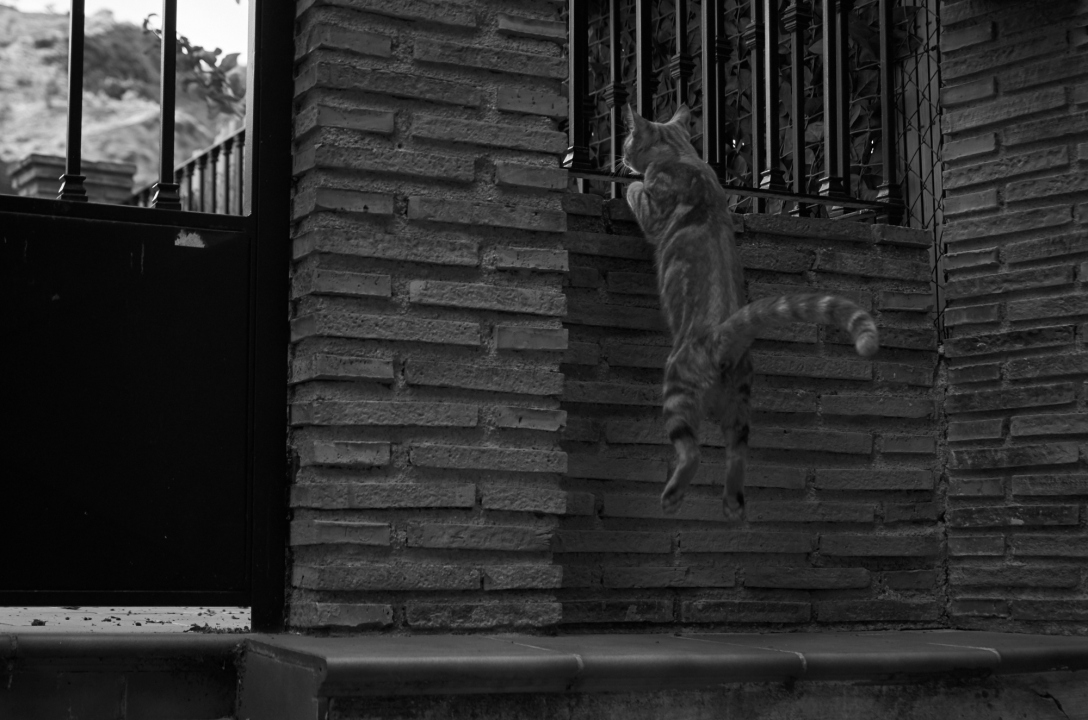 Curious alley cat in Monachil.