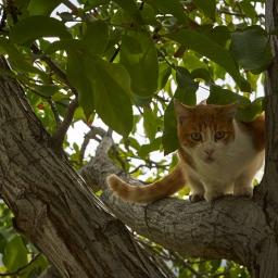 Cats of Monachil